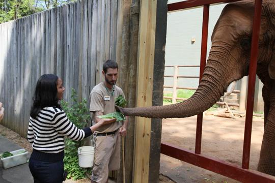 JOB ALERT: Zoo Atlanta looks to fill seasonal positions at job fair